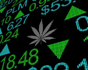 These 3 Marijuana Stocks Are Flailing Strong Buy Signals